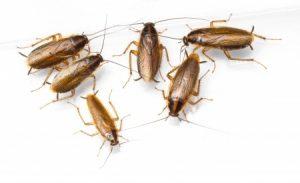Cockroach Exterminators Melbourne