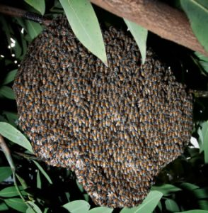 pest control melbourne bee removal