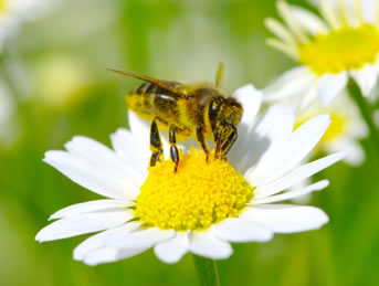 pest control melbourne bees