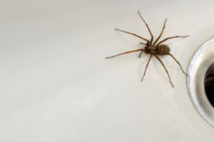 Melbourne Spiders Pest Removal
